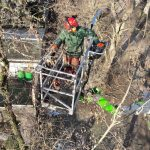 Baumpflege Vogtland